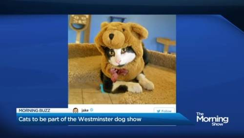 Watch Westminster Dog Show Online In Canada