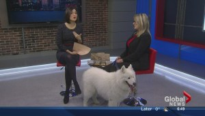 Pet week: sweet treats for your pets