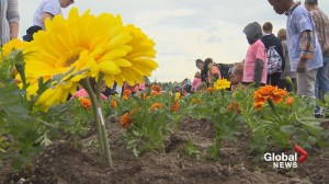 The Marigold Project 'just keeps growing': founder Barry Ogden
