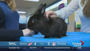 Adopt-A-Pet: Jiminy the rabbit