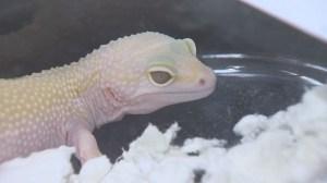 Manitoba reptile breeders expo draws rare animals to Winnipeg.