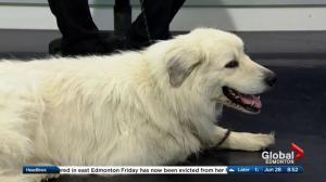 Edmonton Humane Society: Nimbly & Buzz
