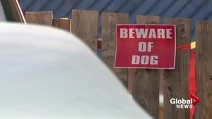 Calgary boy in hospital after being attacked by pair of dogs