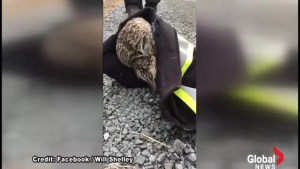 'He won the lottery. The bird lottery': N.S. men save injured owl