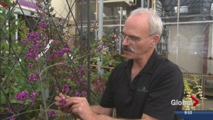 Gardening: Ornamental plants for winter