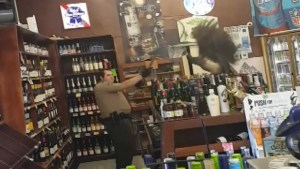 Peacock gets stuck in a liquor store caught on camera