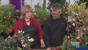 Gardenworks: 'Scent-sational' Valentine's Day gift ideas