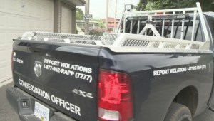 Bear tranquilized in South Vancouver