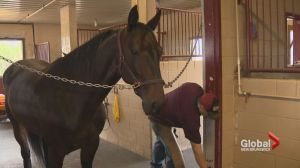 Horse owners caught in the middle of Fredericton Exhibition and Horse Racing New Brunswick squabble