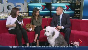 St. John's Ambulance therapy dogs calendar
