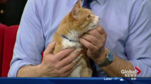 Edmonton Humane Society: Justice and Jerry