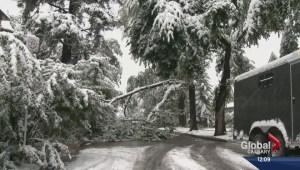 Snow damage across Calgary