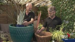 Gardening: Perennials Preferred