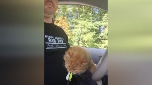 Cat survives over 24 hours with arrow shot through his head