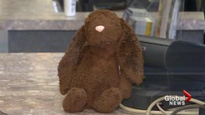 Halifax museum's attempt to locate lost bunny's owner goes viral