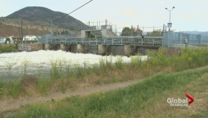 Okanagan Lake wasn't lowered sooner to protect fish stock