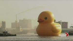 Ontario PCs kick out MPP, Liberals fund giant rubber duck