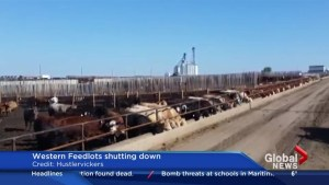 Western Feedlots winds down cattle operations