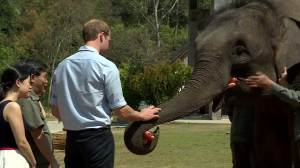 Prince William feeds elephant in China