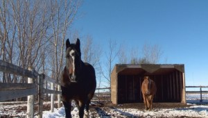 Roof collapse at the Lethbridge Therapeutic Riding Association