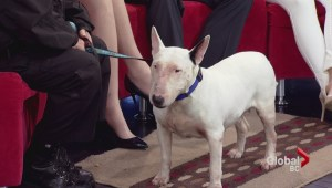Adopt a Pet: Fiona