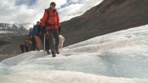 Scientists and tour guides warn of melting Alberta glaciers