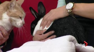 Adopt a Pet: Whisk the rabbit and Sunny the cat