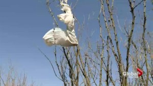 Time to dump plastic bags?