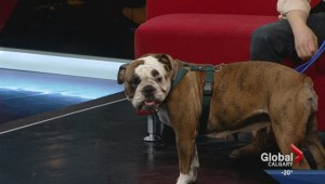 Pet of the Week: Naya
