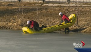 Dog rescued from ice