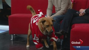 Pet of the Week: Toby
