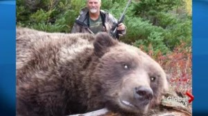 Grizzly bear trophy hunt expands