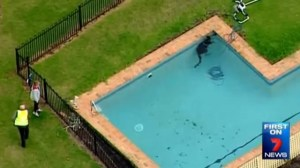 Kangaroo rescued after getting trapped in pool in Victoria state