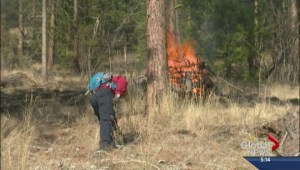 Reducing wildfire risks