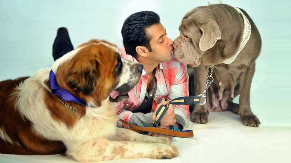 Salman-Khan-dog-parent