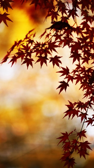 Wallpapers of the week: autumn