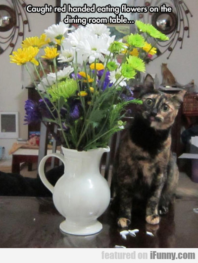 Caught Red Handed Eating Flowers On The Dining...