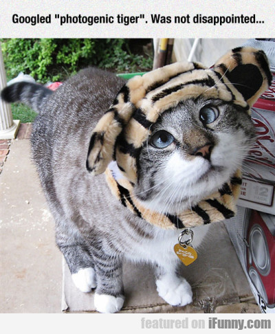 Googled Photogenic Tiger
