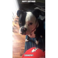 Small Crop Of Happy Birthday Dog Meme