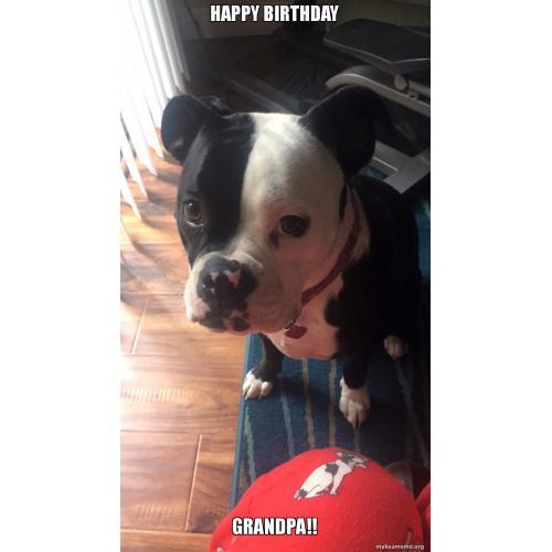 Medium Crop Of Happy Birthday Dog Meme