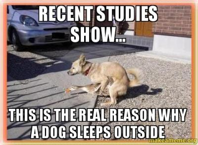 recent studies show... this is the real reason why a dog sleeps outside | Make a Meme