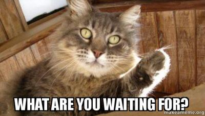 What are YOU waiting for? - Pointing cat | Make a Meme