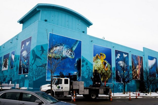 Sharks arrive at SEA LIFE Michigan Aquarium at Great Lakes Crossing