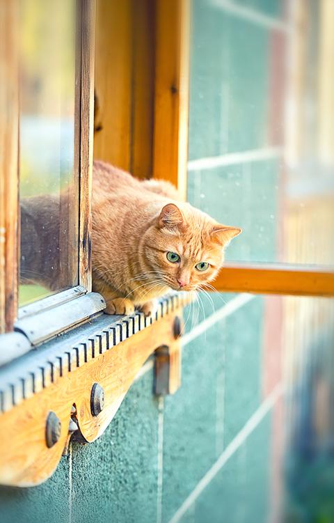 Koti kissan silmin