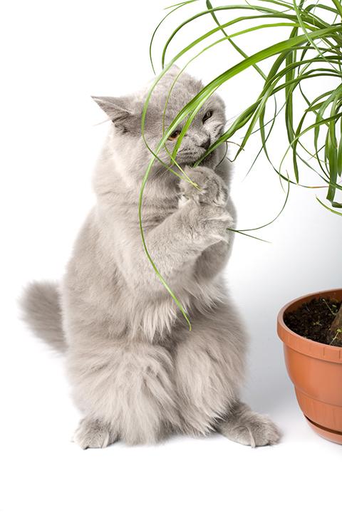Kissalle haitalliset kasvit