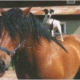 Min hästtokiga parson Fiffi