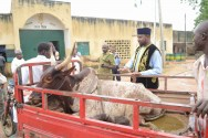 Save Bauchi State Organisation, donated a cow as Sallah gift to inmates of the Bauchi Prison