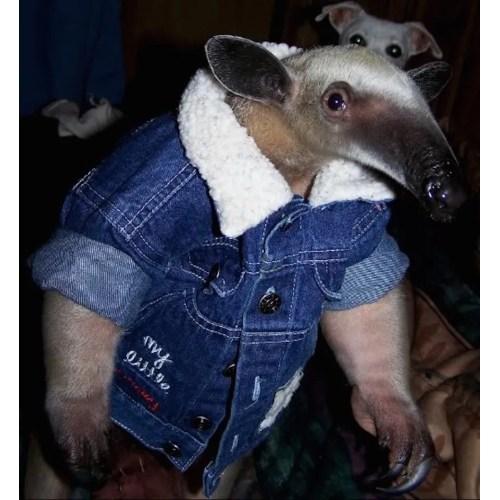 Medium Crop Of Dog Wearing Pants
