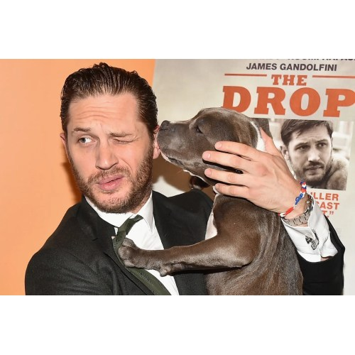 Medium Crop Of Tom Hardy Dog
