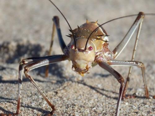 Medium Of What Do Crickets Eat